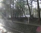 西芳寺の写真2枚目