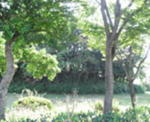 天皇の社古墳の写真