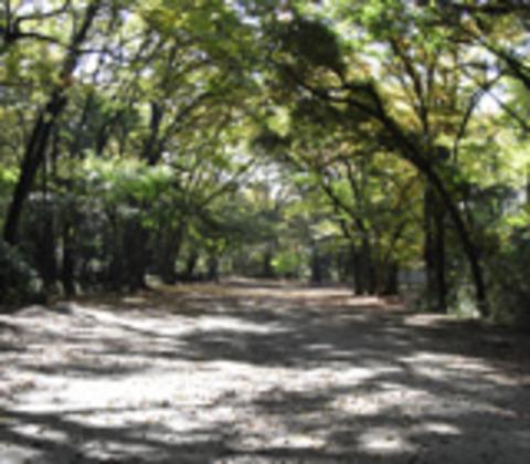 糺の森の写真