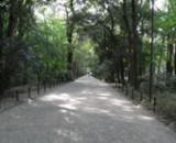 糺の森の写真2枚目